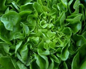 salad-346250_1280